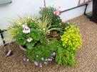 Little England Cottage thumbnail photo 17