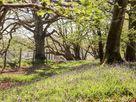 Deer lodge at Chapel Lodges thumbnail photo 19