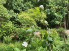 Sunny Cottage thumbnail photo 47