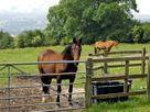 Spout Barn thumbnail photo 9