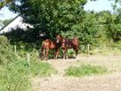 New Thatch Farm thumbnail photo 10