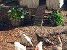 Oolitic Springs thumbnail photo 10