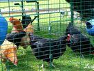 Eden House Wing thumbnail photo 12