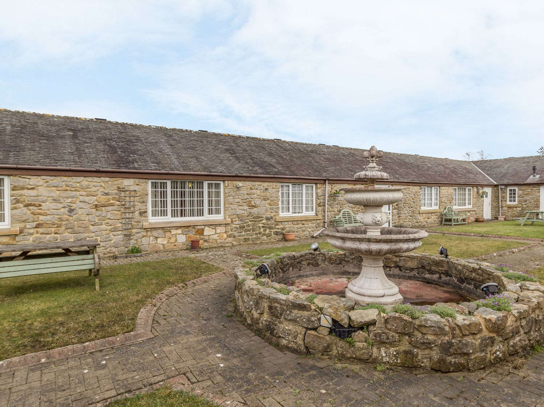 Curlew,  Northumbria