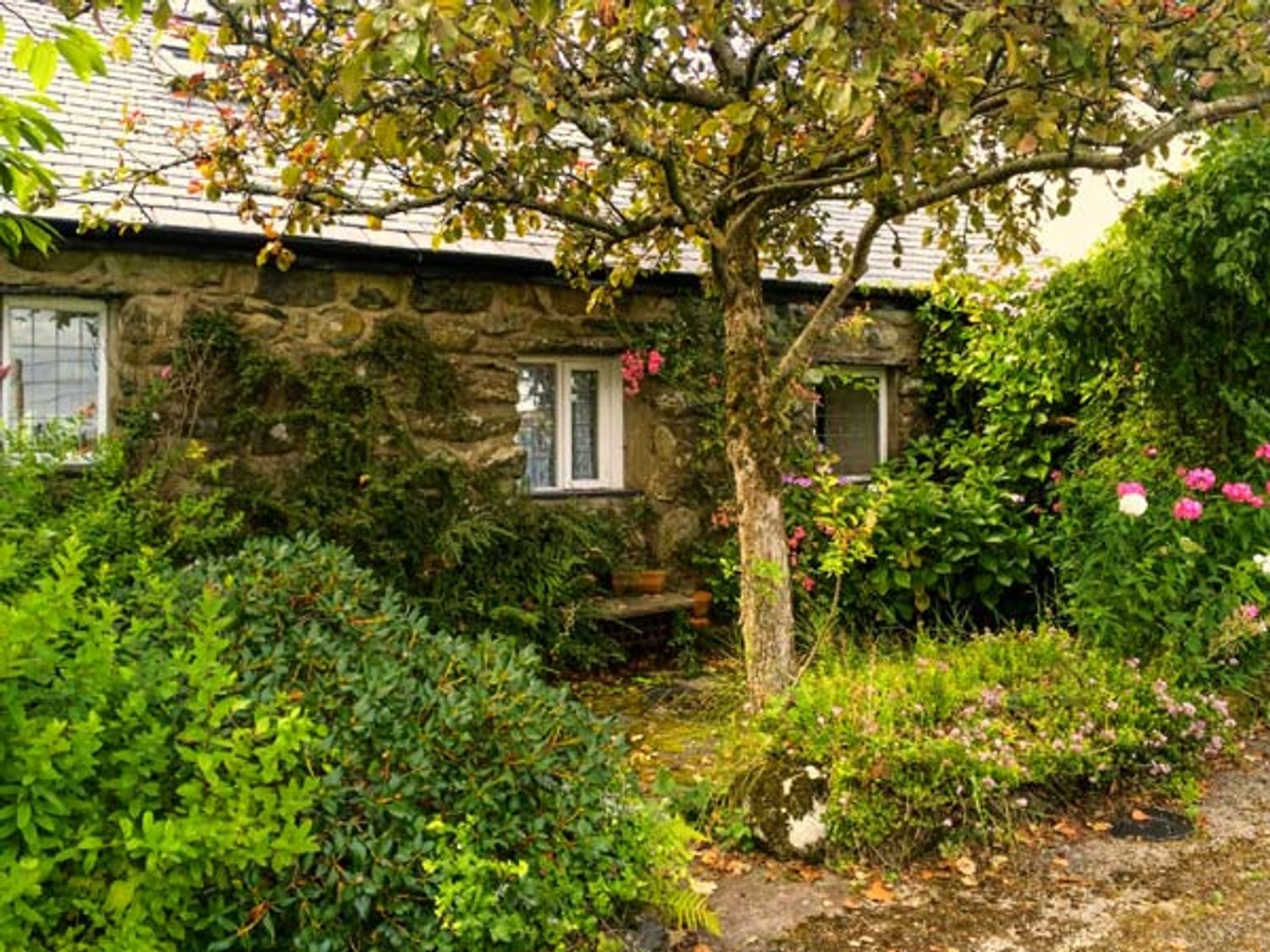 Hendy Cottage - North Wales - 923445 - photo 1