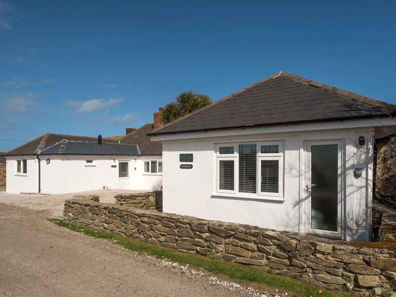 Guillemot - Cornwall - 983127 - photo 1