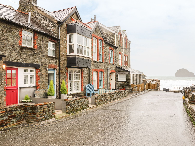 Salty Sea Dog - Cornwall - 999515 - photo 1