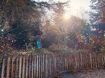 Sunny Cottage photo 2