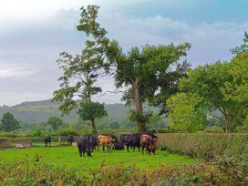 Haimwood Byetake - Mid Wales - 1001069 - thumbnail photo 29