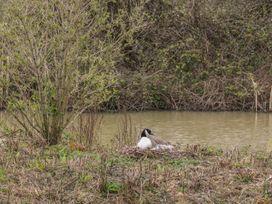 Peek A Boo - Devon - 1001836 - thumbnail photo 15
