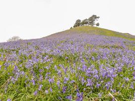Woodlanders - Dorset - 1002833 - thumbnail photo 29