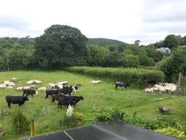 Lazy Hare at Jen's Orchard - Cornwall - 1003123 - thumbnail photo 20