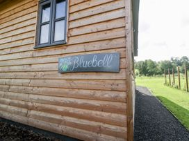 Bluebell - Somerset & Wiltshire - 1003583 - thumbnail photo 7