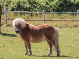 1 Paythorne Farm Cottages - Kent & Sussex - 1005383 - thumbnail photo 21