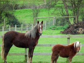 1 The Stables - Isle of Wight & Hampshire - 10062 - thumbnail photo 10
