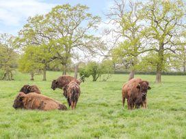 Bush Farm Annexe - Dorset - 1008355 - thumbnail photo 30