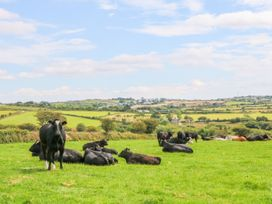 The Old Cows House - Cornwall - 1008677 - thumbnail photo 21