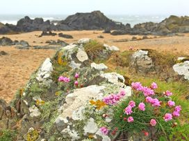 Flip Flops - Anglesey - 1008825 - thumbnail photo 25