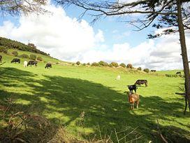 Swn Y Gwynt - North Wales - 1009018 - thumbnail photo 21