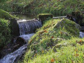 The Honey Pot - North Wales - 1009040 - thumbnail photo 21