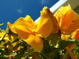 Tyn Towyn - Bwthyn Haf - Anglesey - 1009060 - thumbnail photo 8
