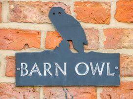 Barn Owl - Lincolnshire - 1010330 - thumbnail photo 4