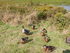 Glan Gors - Anglesey - 1017824 - thumbnail photo 22