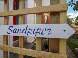 Sandpiper - North Wales - 1022856 - thumbnail photo 3