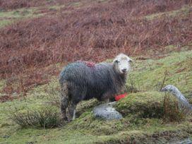 Fellside View - Lake District - 1025367 - thumbnail photo 31