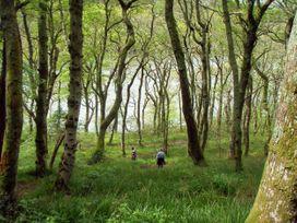 Oyster Lodge - Devon - 1026088 - thumbnail photo 20