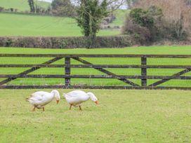 The Parlour - East Ireland - 1033590 - thumbnail photo 33