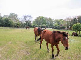 Garden House - South Coast England - 1033896 - thumbnail photo 25