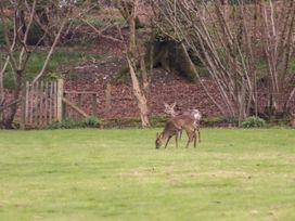 Deer lodge at Chapel Lodges - Dorset - 1038027 - thumbnail photo 19