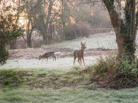 Deer lodge at Chapel Lodges - Dorset - 1038027 - thumbnail photo 21