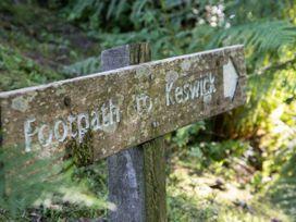 Scots Pine - Lake District - 1041319 - thumbnail photo 19