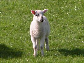 The Old Farm - Lake District - 1042573 - thumbnail photo 20