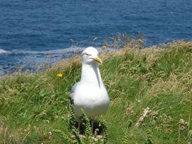 Two Acres - Cornwall - 1047754 - thumbnail photo 14