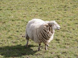 Gorwelion - Anglesey - 1053009 - thumbnail photo 18