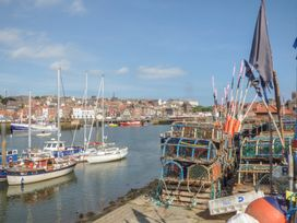 Laridae - Whitby & North Yorkshire - 1054262 - thumbnail photo 21