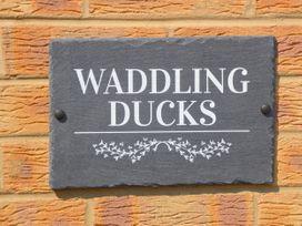 Waddling Ducks - Norfolk - 1054560 - thumbnail photo 3