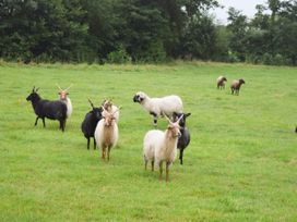 The Stables - Somerset & Wiltshire - 1057778 - thumbnail photo 35