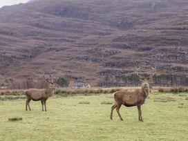 Stalker's Cottage - Scottish Highlands - 1060423 - thumbnail photo 23