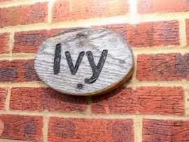 Ivy - Kent & Sussex - 1062079 - thumbnail photo 3