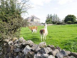 The Cuddly Cow - County Donegal - 1063603 - thumbnail photo 13