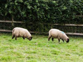 Suffolk - Somerset & Wiltshire - 1063938 - thumbnail photo 16
