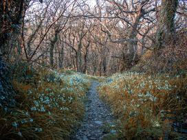 Carrows Stable - Cornwall - 1066679 - thumbnail photo 18