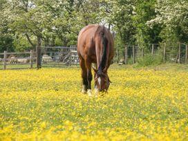 Myddelton Grange - Yorkshire Dales - 1071066 - thumbnail photo 51