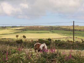 Driftwood - Cornwall - 1074393 - thumbnail photo 14