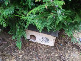 Snuffling Hedgehog - Lincolnshire - 1074739 - thumbnail photo 4
