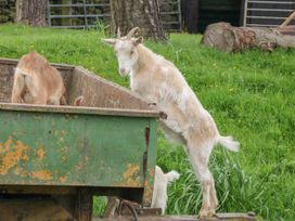 Packhorse Shepherd's Hut - Peak District - 1076139 - thumbnail photo 12